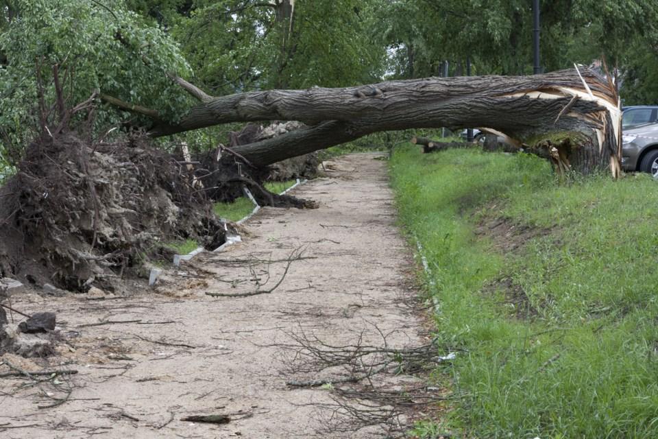 010417-downed tree-wind storm-AdobeStock_113780255