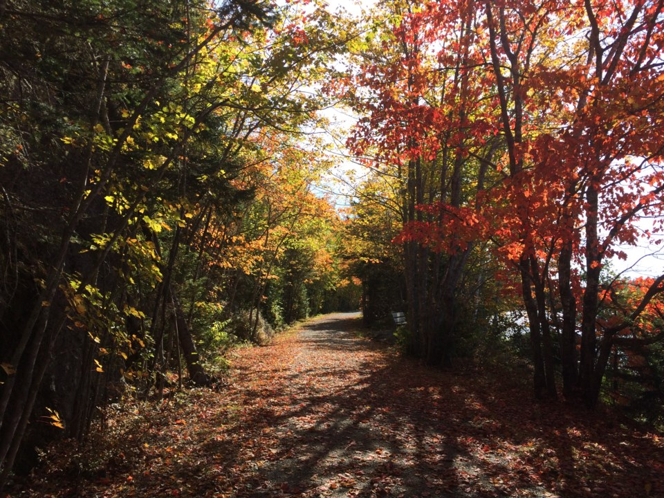101717-fall colours-autumn-leaves-1