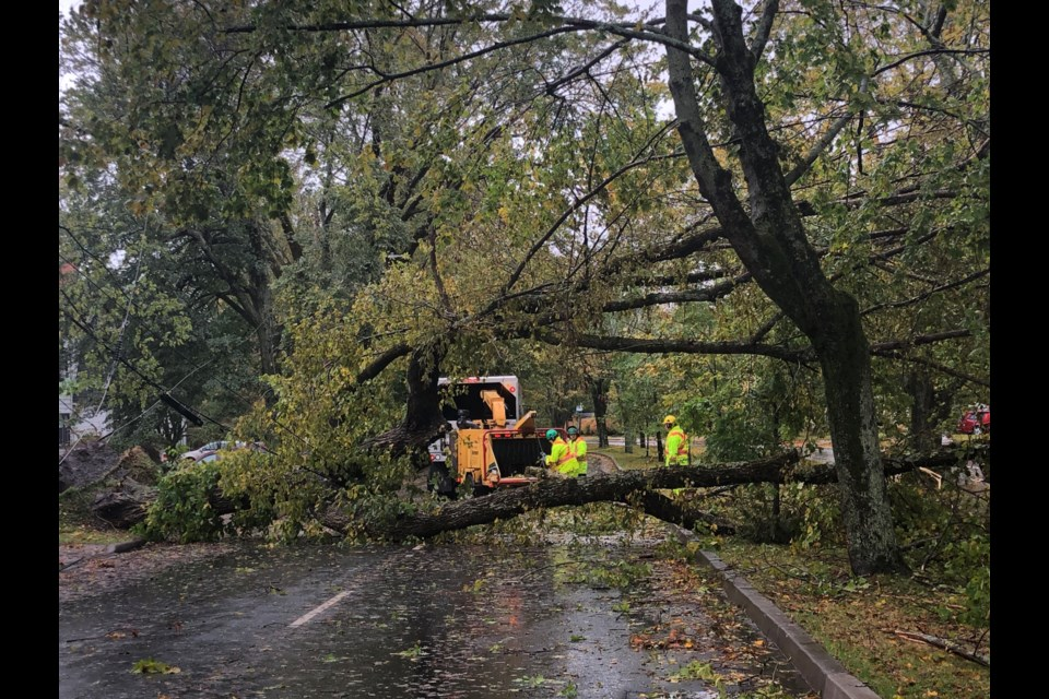 Crews cut up a downed tree on Connaught Ave. on Oct. 17, 2019 (Meghan Groff/HalifaxToday.ca)