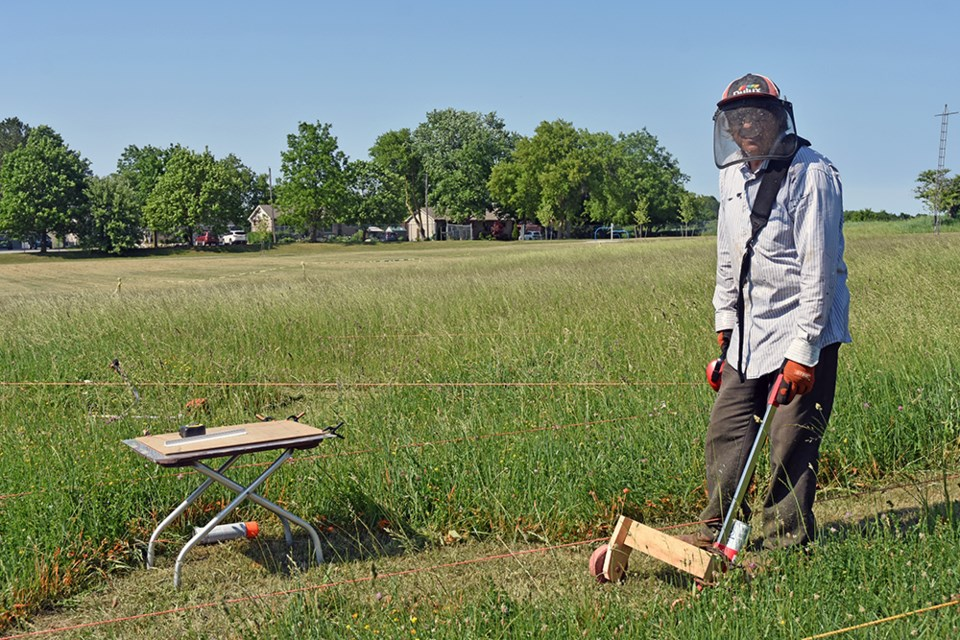 Artist Denis Bolohan uses a weed wacker to carve a living labyrinth in the tall grass, near the Cookstown library.