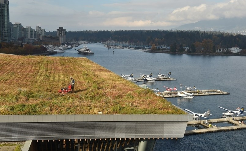 landscaping-crews-mow-the-green-roof-at-vancouver-convention-centre-once-a-year-it-takes-about-two
