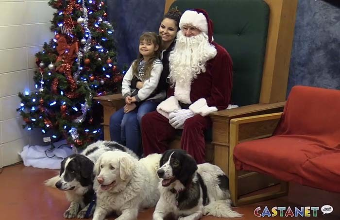 santa-dogs-1-min