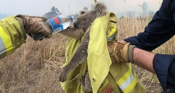 aus-bushfires-koala-min