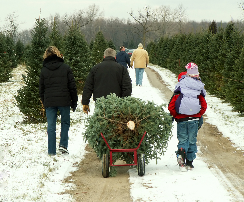 Spruce up your Christmas tree this year by buying local