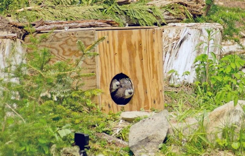marmot-release-2009784-jpg