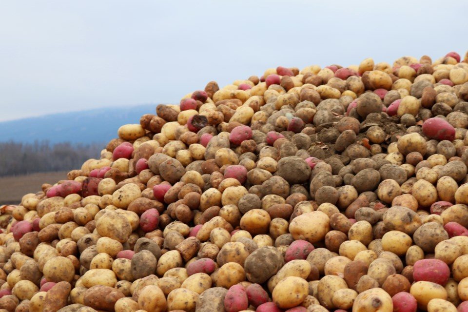 If you recognize this potato pile, this story is for you. (via Eric Thompson)