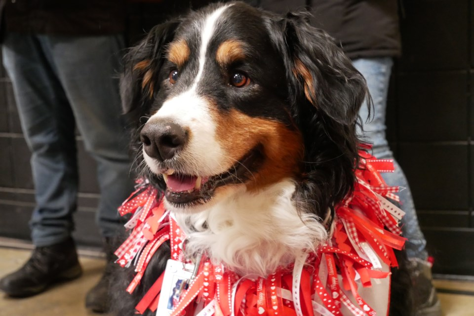 St. John Ambulance therapy dogs showed off their best tricks at their seventh-anniversary bash. (via Cailyn Mocci)