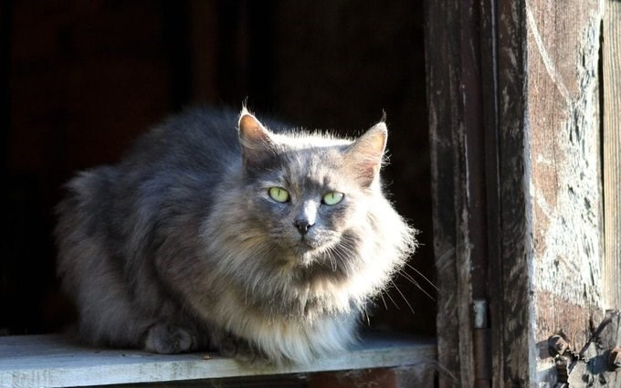 barn-cat