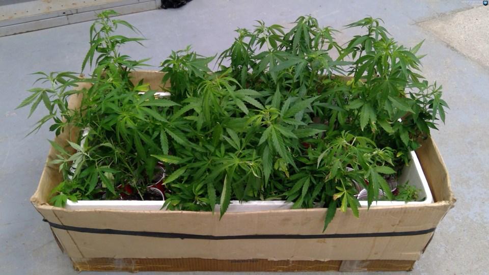 33 pot plants