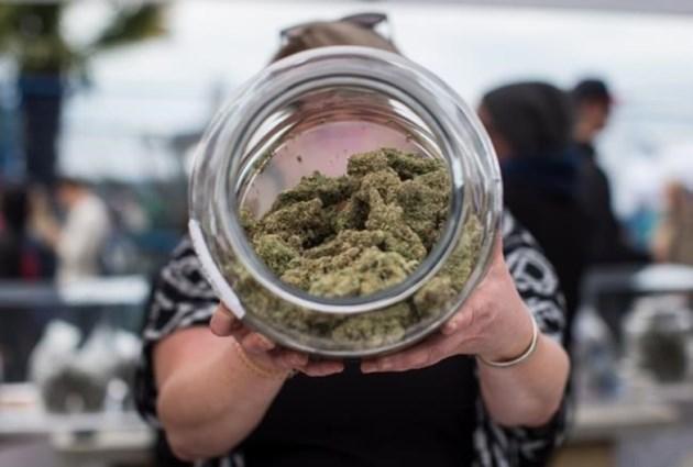 pot-weed-cp