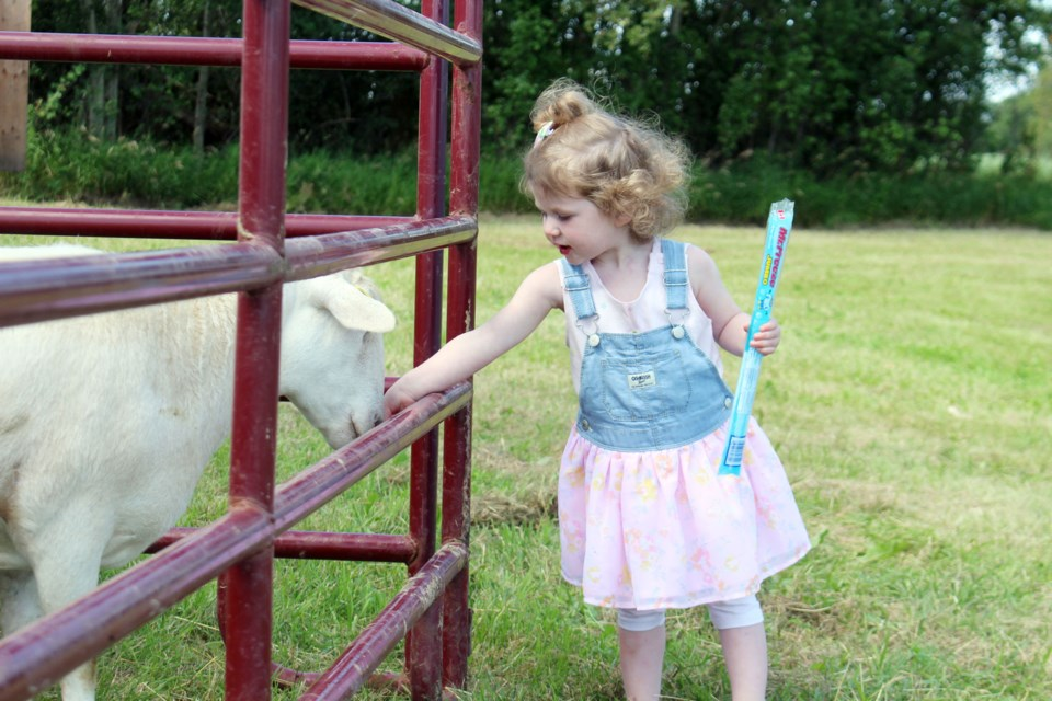 Quinn Ross, 2, enjoys the petting zoo at Charlotte Lake Farms during Alberta's Open Farm Days. Photo by Robynne Henry.