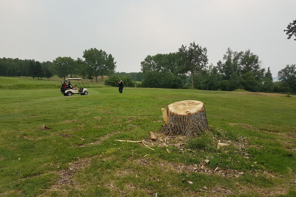 Golfers return to the greens after old growth trees toppled at Lac La Biche Golf Club during severe storm that swept through the region on July 10. Photo by Jazmin Tremblay.