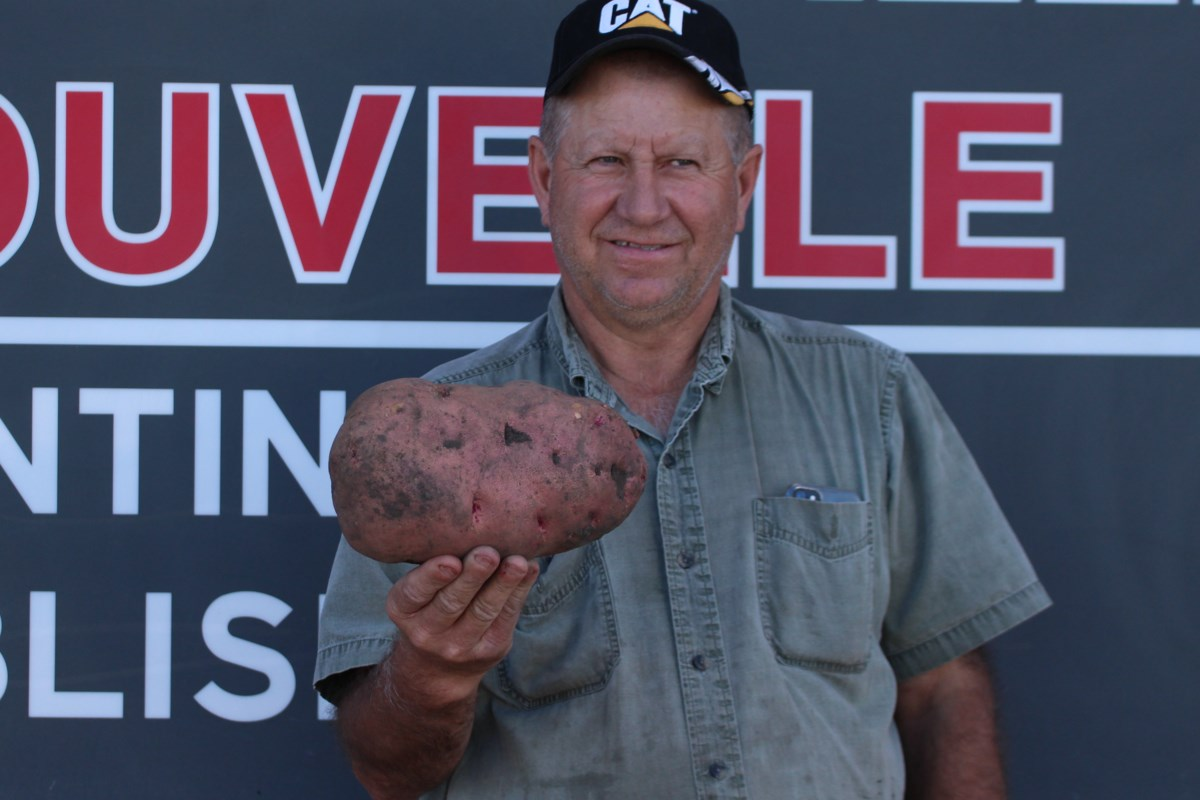 Giant potatoes unearthed in Bonnyville