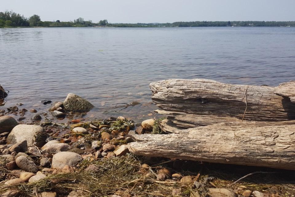 Wood by lake
