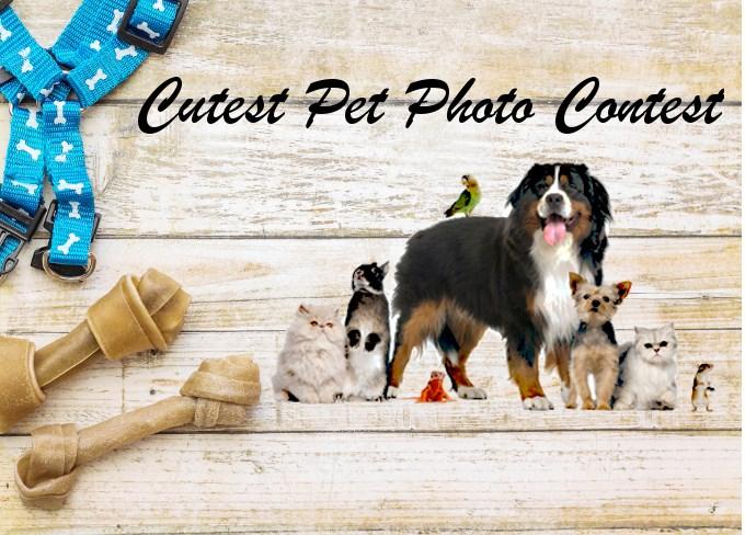 cutest-pet-photo-contest-main