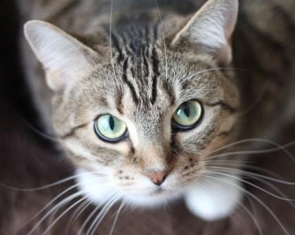cat humane