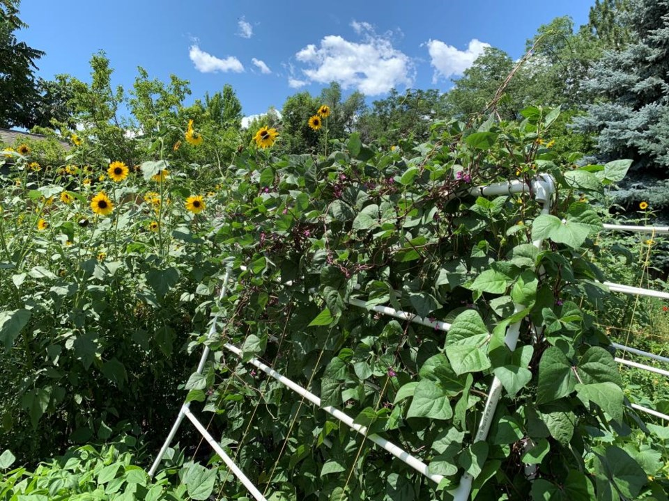 2021_03_13_LL_get_growing_sunflowers1