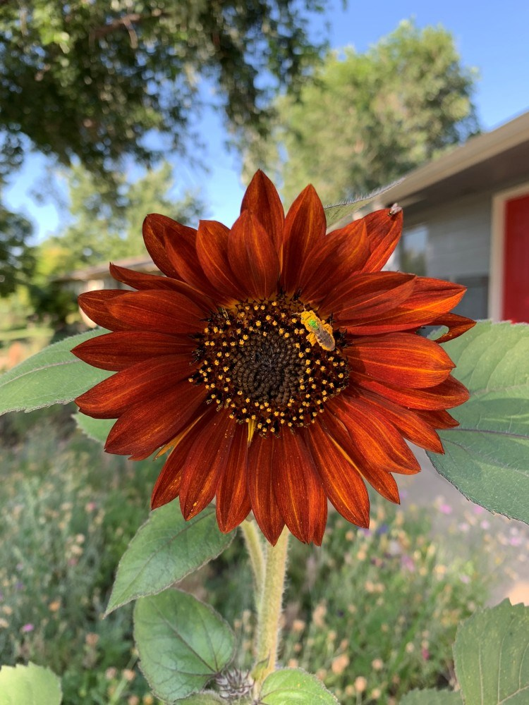 2021_03_13_LL_get_growing_sunflowers2