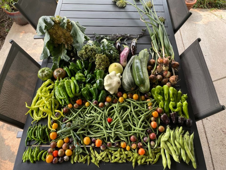 veggies harvest 8_7