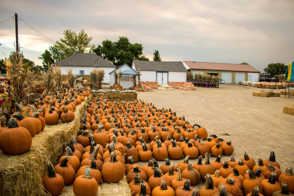 2020_10_01_LL_Rocky Mountain Pumpkin Ranch2
