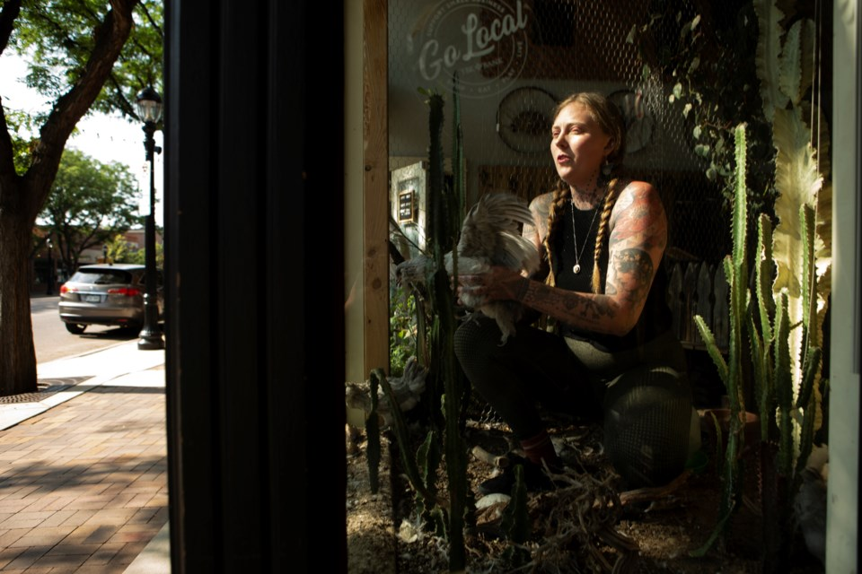 Morgan Alynn, owner of The Cactus Coven and Thistle Witch Tattoo at 439 Main St, cares for her four Ameraucana hens in the storefront window on July 16. Alynn created a mini farm in her storefront window. Photo by Ali Mai | ali.mai.journo@gmail.com