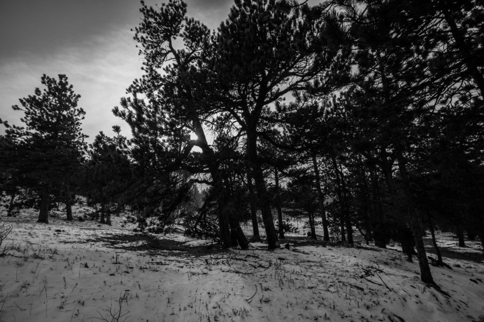 2020_09_24_LL_Outside_snowy_trail
