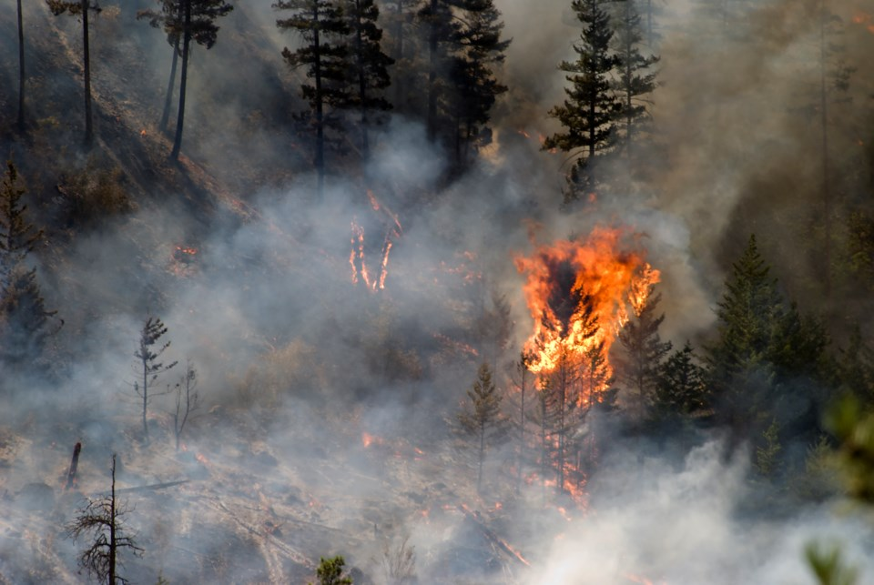 2020_08_21_LL_forest_fire_stock