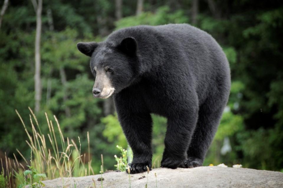 2020_08_31_LL_bear_stock