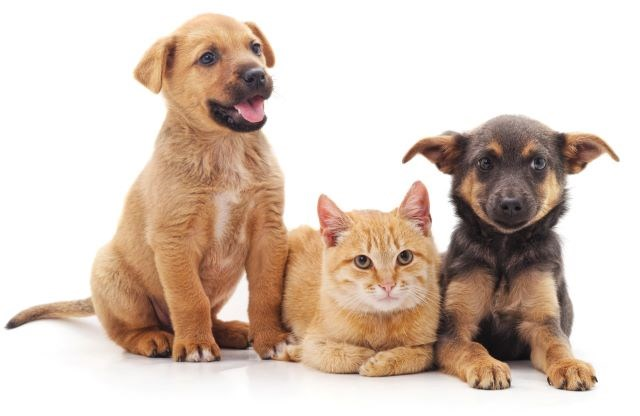 Dogs and cat 02212020