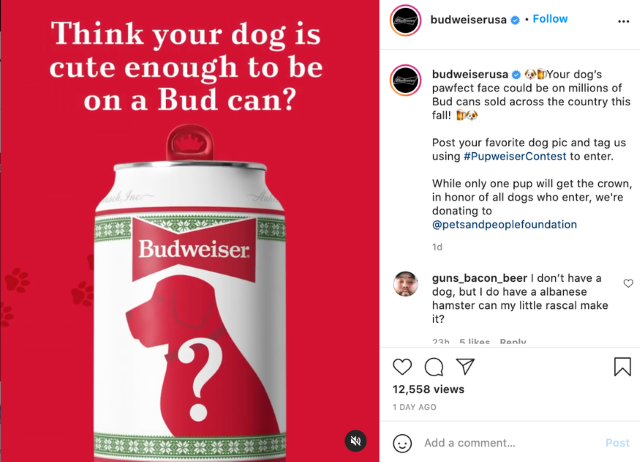 Budweiser dog