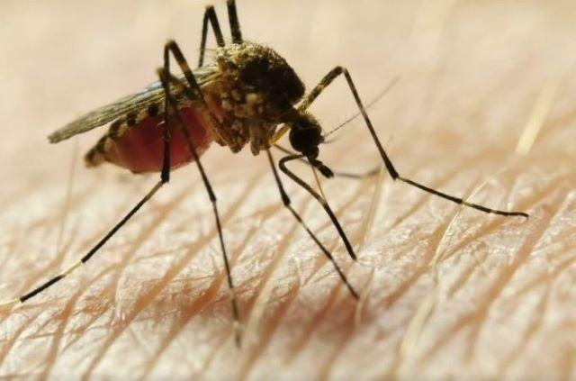 Mosquito 07132020