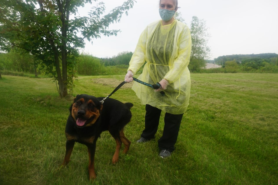 Zoe, one of the dogs that came to our region from Northern Ontario, enjoys some playtime with animal care attendant Kama Kallio.