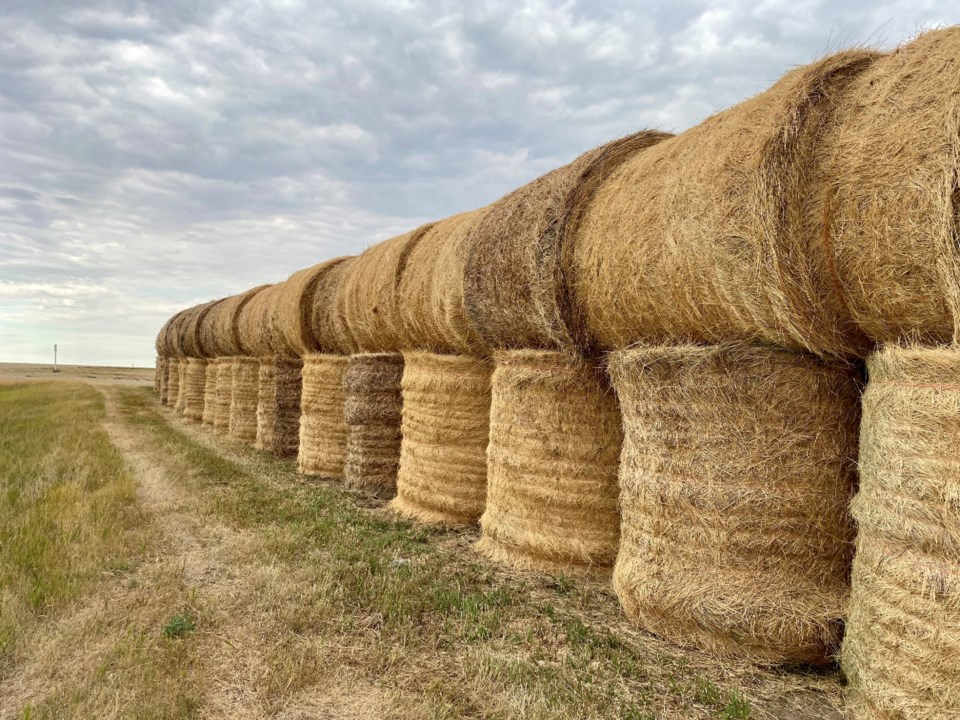 agriculture hay bales stacked
