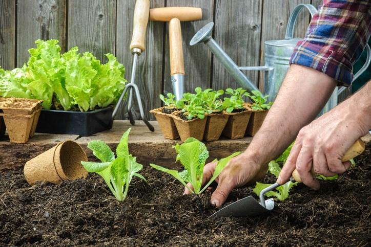 backyard gardening getty images