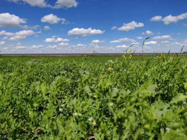 Crop Report Jul 3