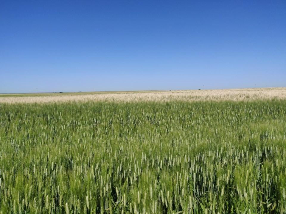 farmers field crop report aug 2019