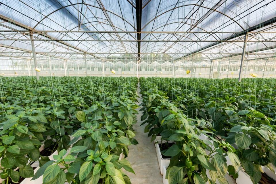greenhouse vegetable farming stock