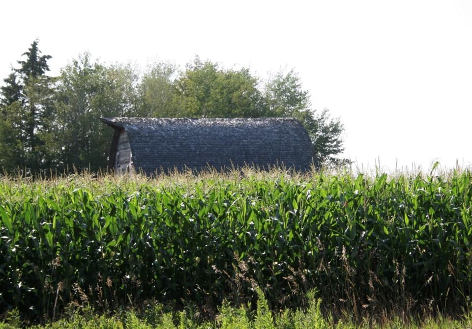 harvest 2019 photo ron walter