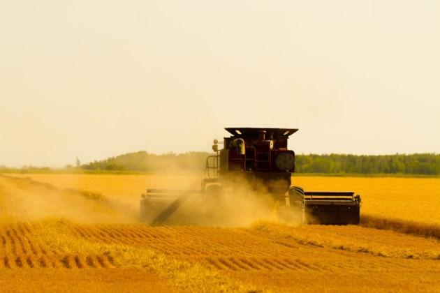 harvesting shutterstock