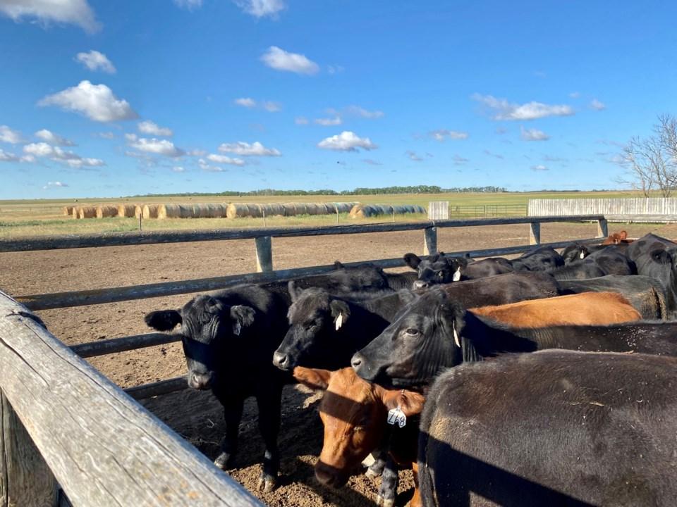 livestock photo sept 2021 by eugenie officer