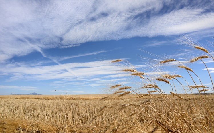 saskatchewan farm sky getty images