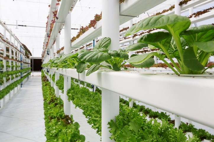 vertical farming getty images