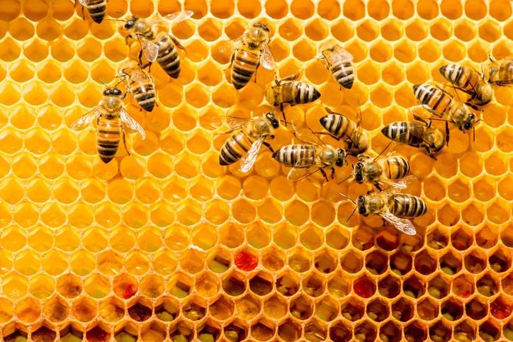 beekeeping getty images