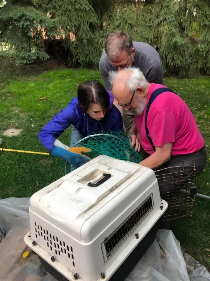 wildlife rehab society volunteers