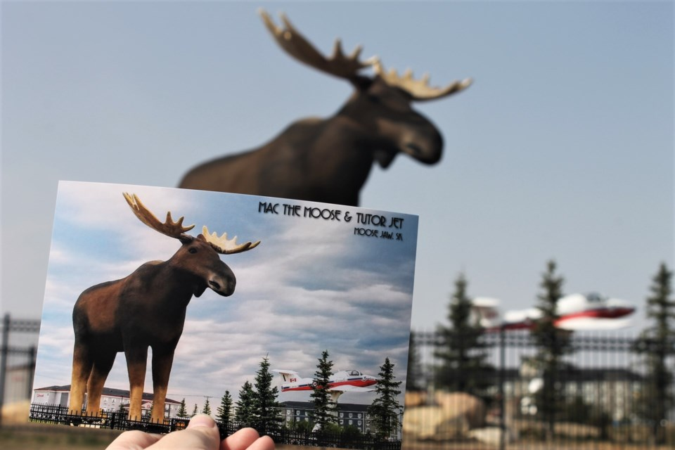 A new image of Mac is featured on Tourism Moose Jaw's postcards, courtesy of a photo contest held a few weeks ago. (photo by Larissa Kurz)