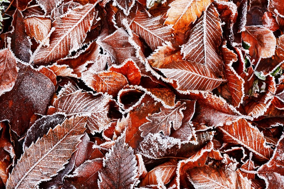 frosty leaves shuttestock
