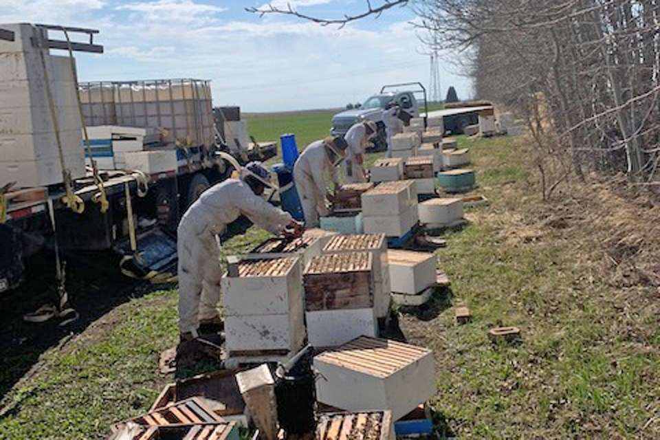 A combination of complications stemming from the late start to spring and COVID-19 lockdown measures has impacted beekeeper operations throughout the province. However, some fared through the difficult circumstances better than others, including Nixon Honey Farm, located east of Innisfail in Red Deer County. Kevin Nixon, a co-owner of the large-scale commercial family business, said he hopes an aid program under development by the provincial government will go to producers who need it the most. 