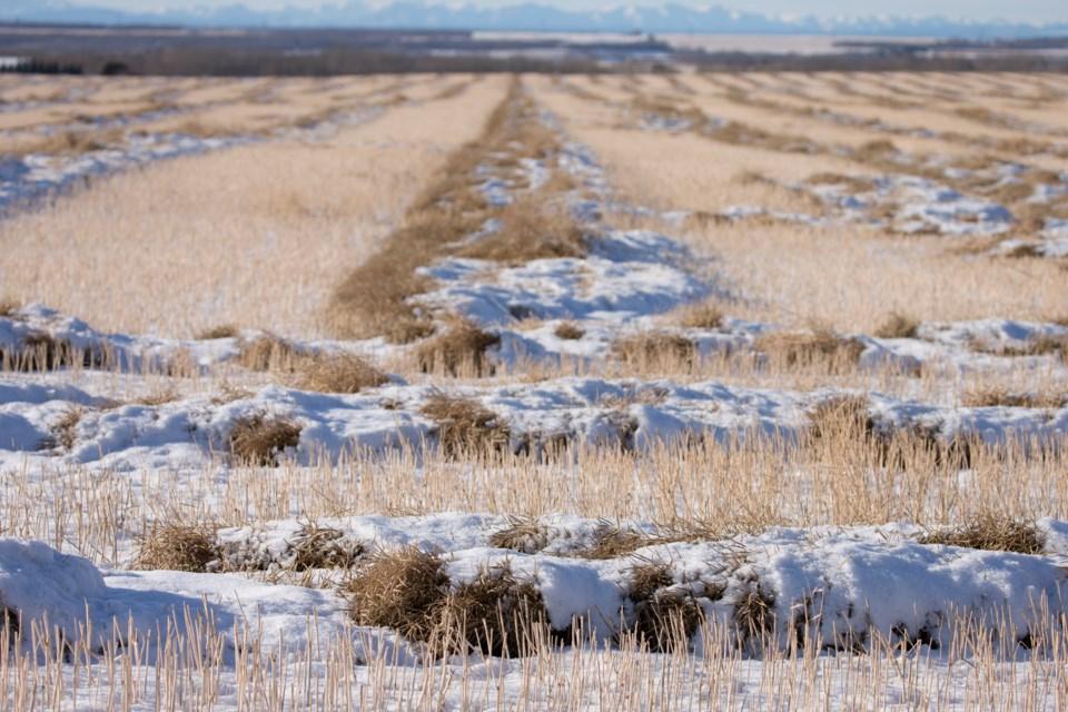 MVT snow on crops