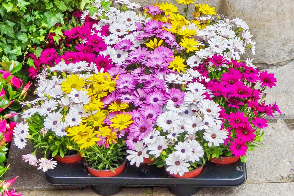 MVT stock flowers for sale