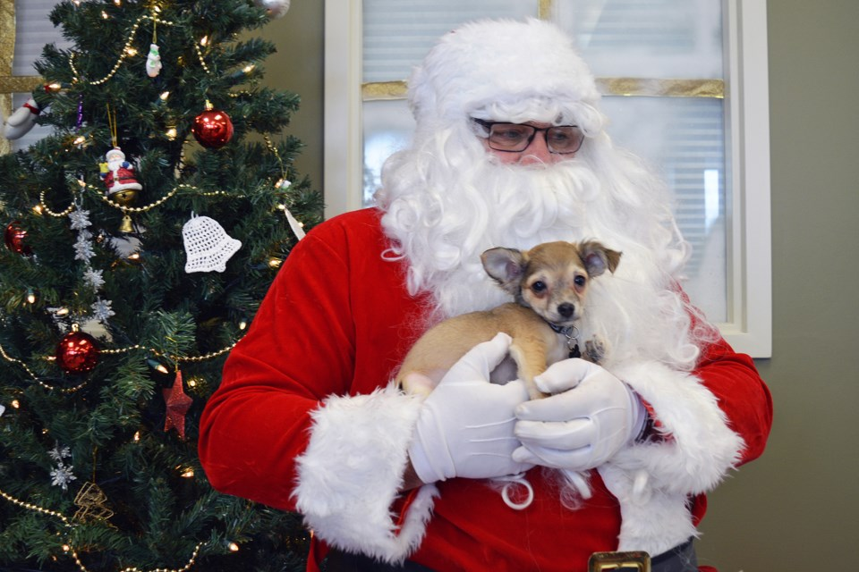 Pets with Santa WEB